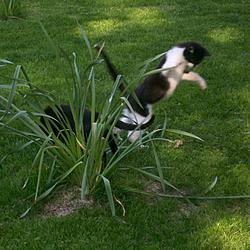 Gato vs Gato vs Planta