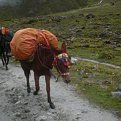Salkantay Trek | Salkantay Trek
