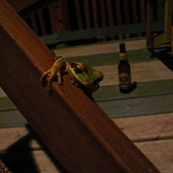 Rana y Cerveza | There's a chance the frog was dead. Maybe he was just wasted.